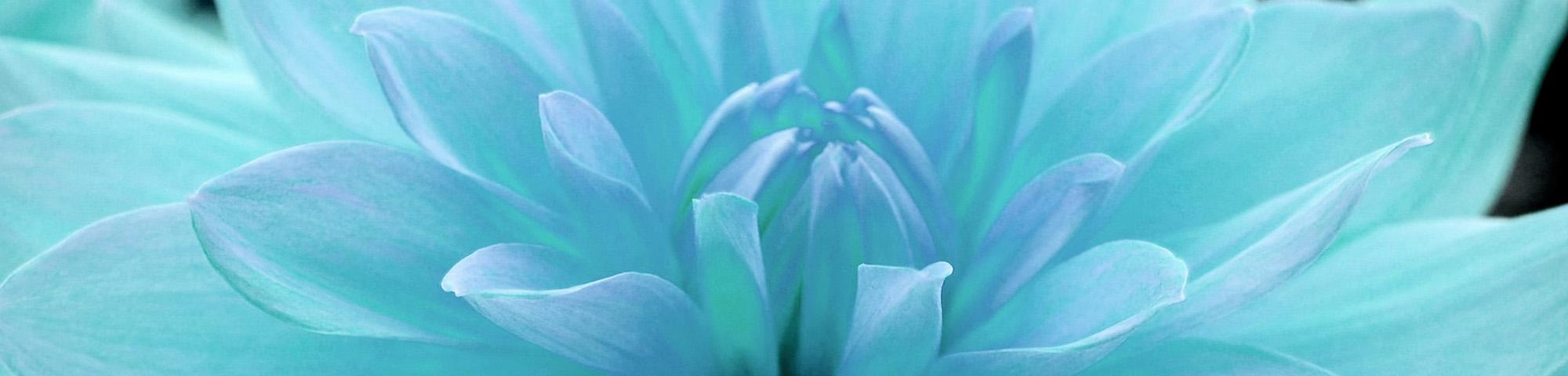 Fond-de-site-fleur