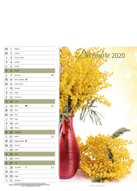 Floral-decembre