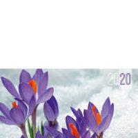 C8_20-1-sefam