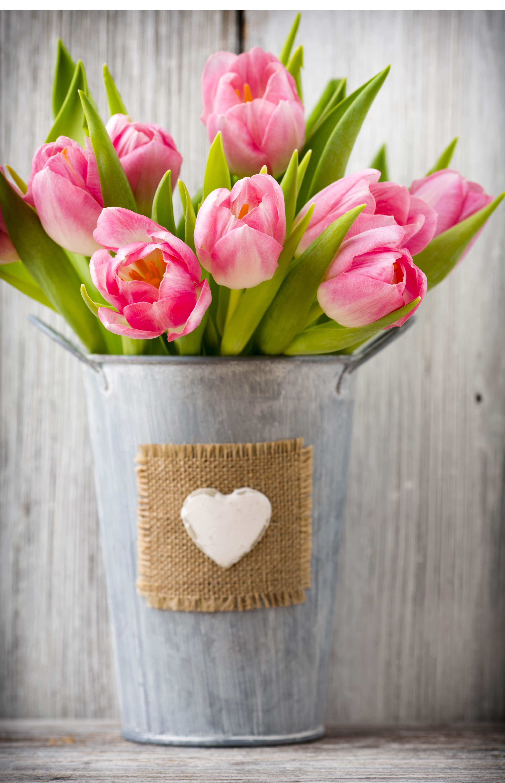 Laminé-tulipes-sefam